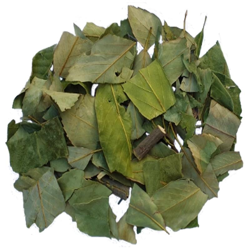 참가시나무잎/동의보감촌 자연산 이백저 (잎+잔가지)건조300g